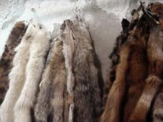 Furs for tribute
